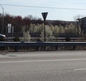 Bradford Pears (Pyrus calleryana) along Route 95