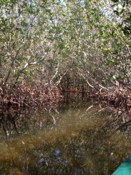Trail through the mangroves.