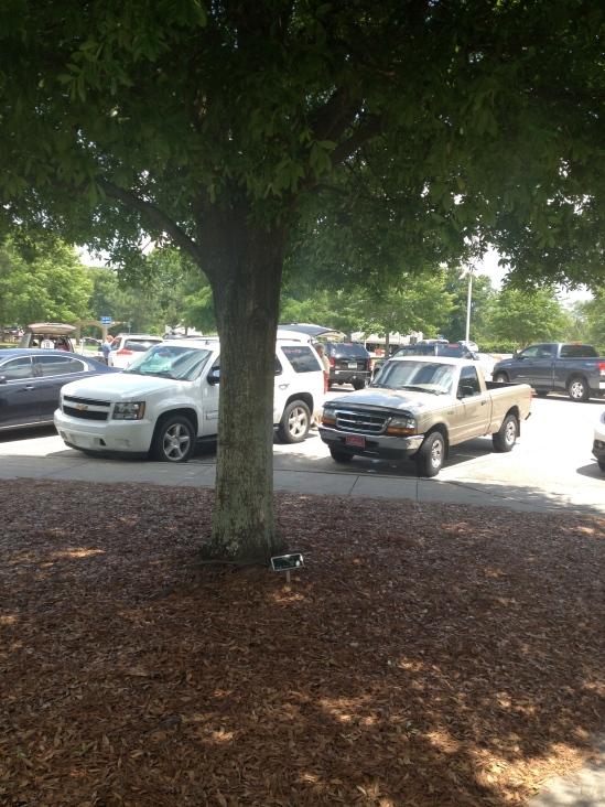 Laurel Oak at a GA Rest Stop
