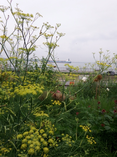 The Butterfly Garden has food plants for caterpillars and adult butterflies. Notice the barge in the background.