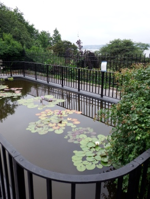 The only Street Side Lily Pool in the City of New York