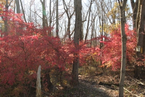 Burning Bush Invades Forest