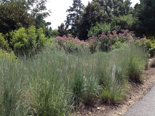 Bold Joe-Pe weed with grasses