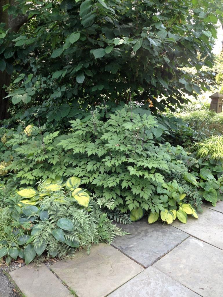 Scott Arboretum Foliage and Textures