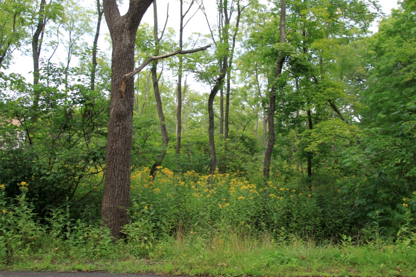 Wingstem fills the wet woods.