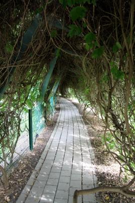 Wisteria Tunnel