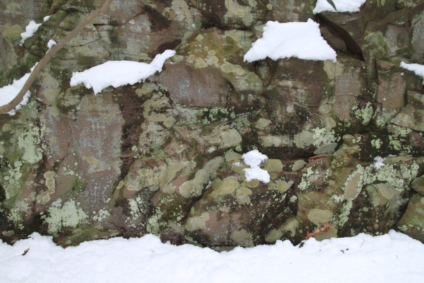 Snow and Lichens in Tuscarora State Park PA
