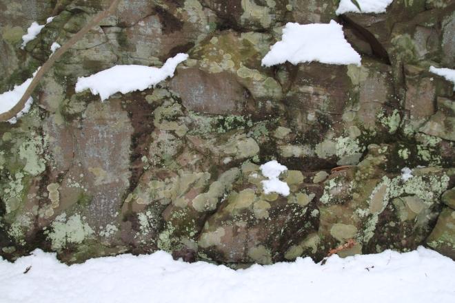 Snow and Lichens in Tuscarora State Park PA