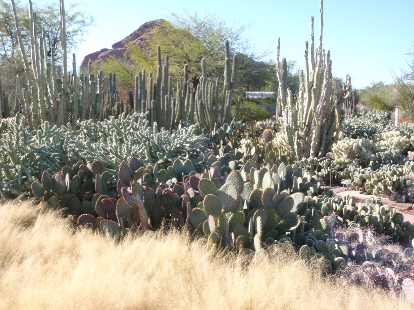 A View of the Southwest Desert from the Desert Botanical Garden in Phoenix Arizona