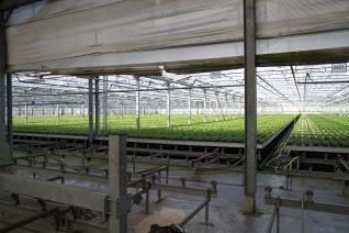 A uniform crop