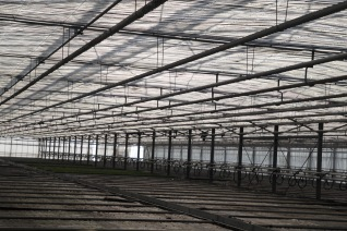 5 Acres of Greenhouses under glass for Azalea Production