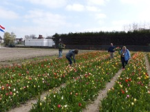 Visitors harvesting their own bouquets.