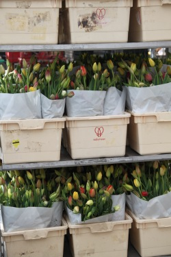 Tulip bouquets ready to go.