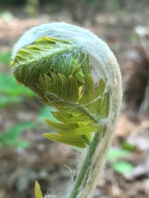 A seemingly bashful fern readying for another season.
