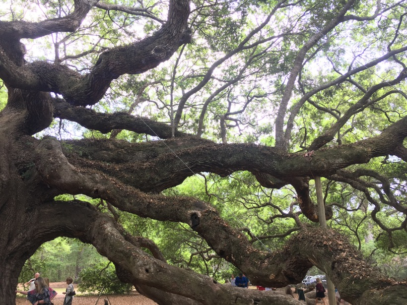 Tree Sized Branches of Angel Oak