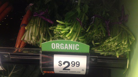 Organic Dandelion greens on display at whole foods market