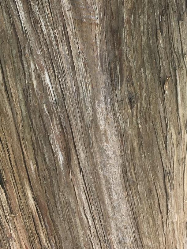 Bermuda Cedar Bark