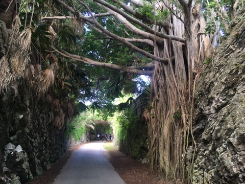 Banyan Tunnel on the national rail trail bermuda