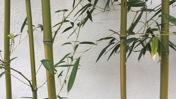 Bamboo against a wall at Shofuso House